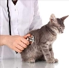 Ветеринарные клиники в Нее